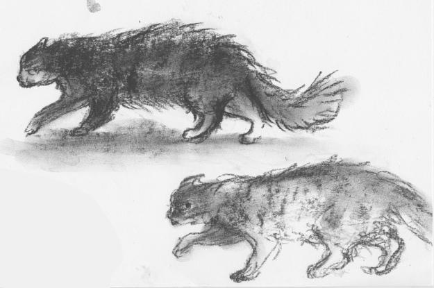 baleful cat sketches 1