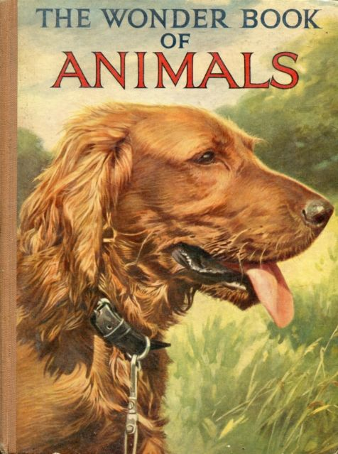 The Wonder Book of Animals: both drawn in and drawn from