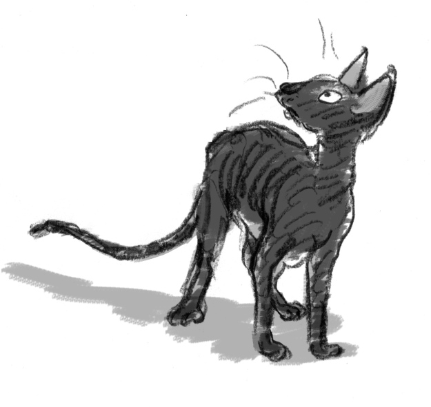 Cornish Rex character lores grey