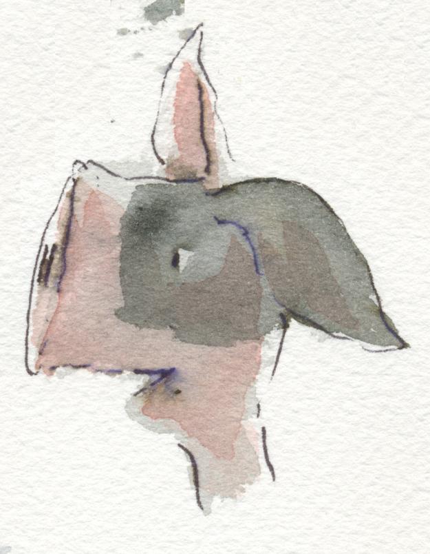 strange piggy