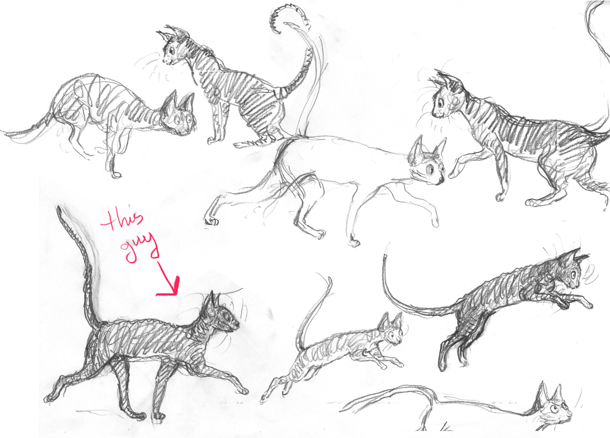 putting thunder cats into perspective endpapers