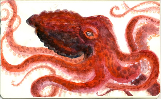 red octopus levels lores