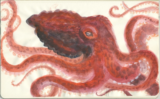 red octopus lores
