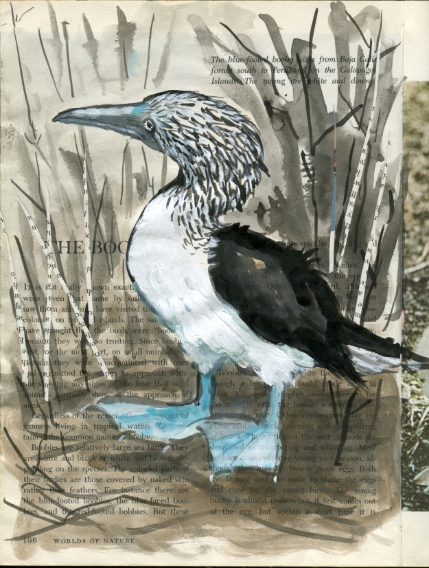 Blue-footed Booby - indian ink, watercolour, white gouache and collage on vintage book page