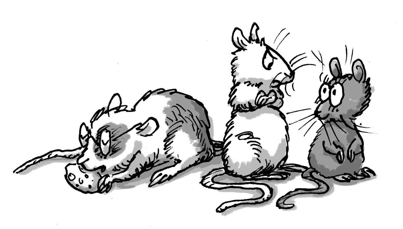 sibling mice: some siblings are too disgustingly cute.