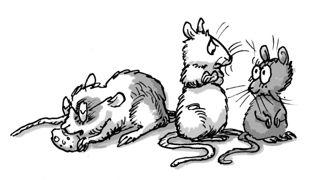 sibling mice: some siblings are too disgustingly cute.