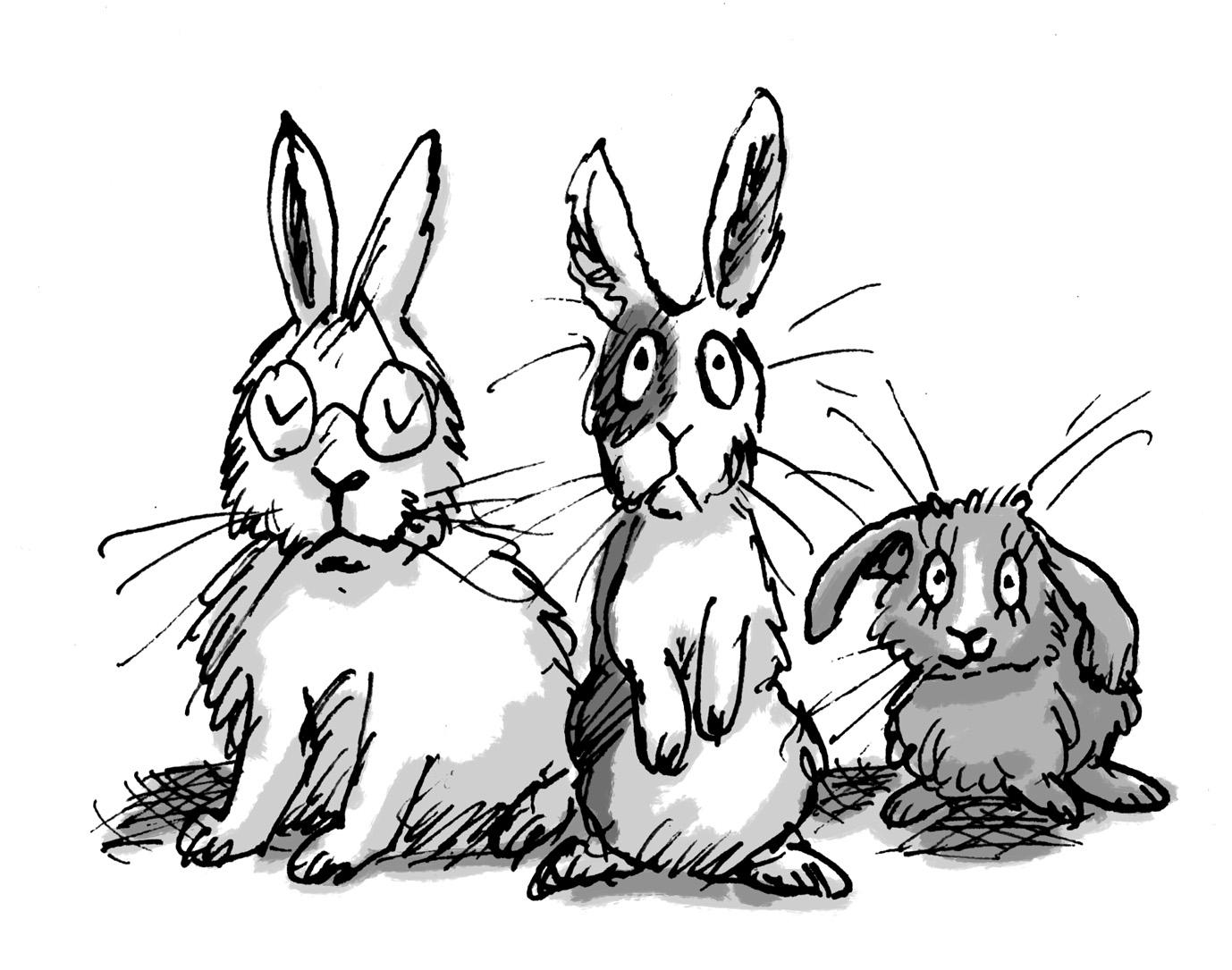 sibling rabbits