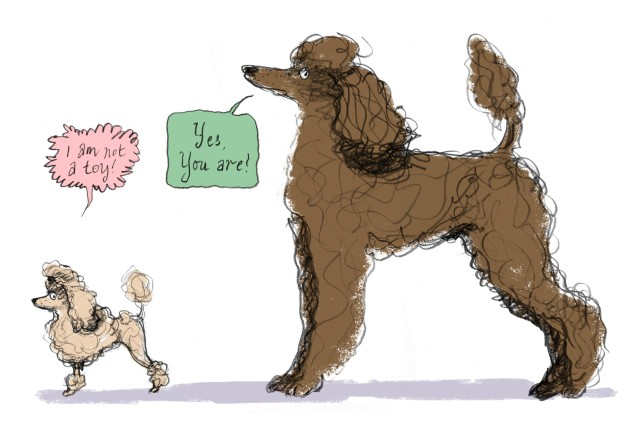 2 poodle sizes judywatsonart lores