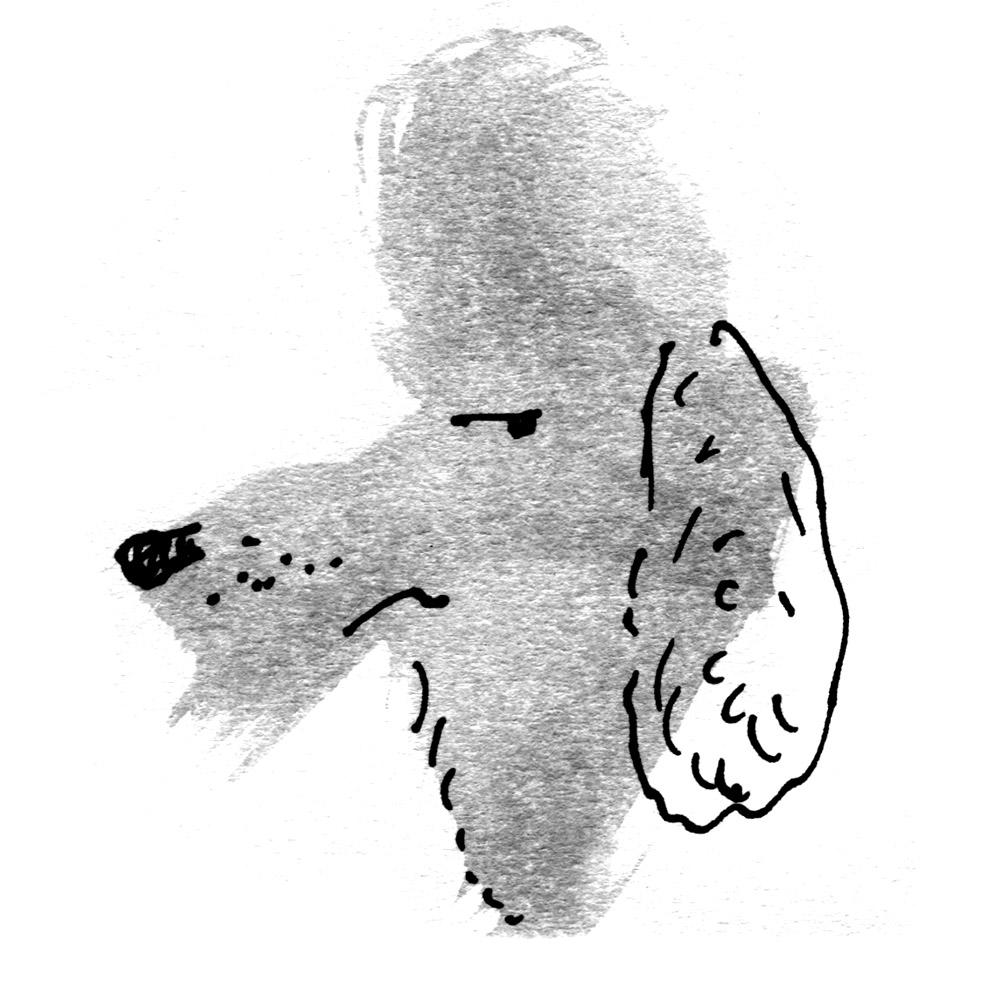 wolfhound x poodle - whoodle judywatsonart lores