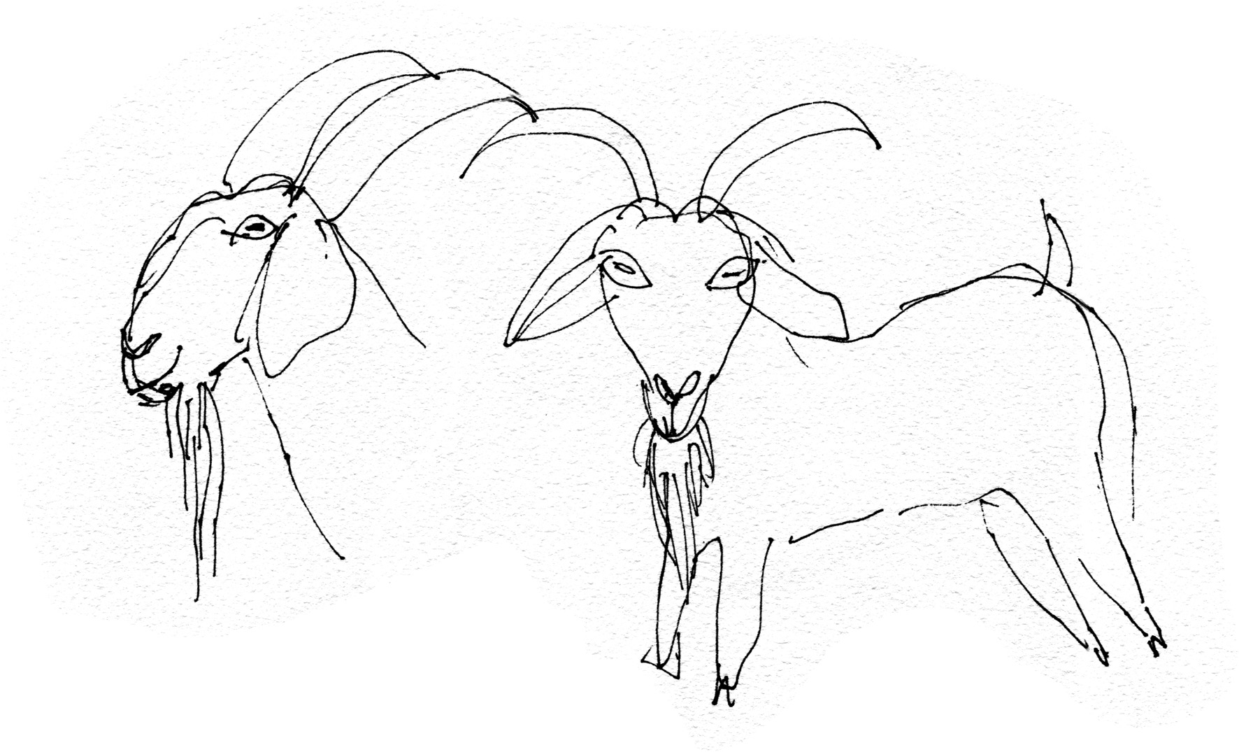 goats 1 judywatsonart lores