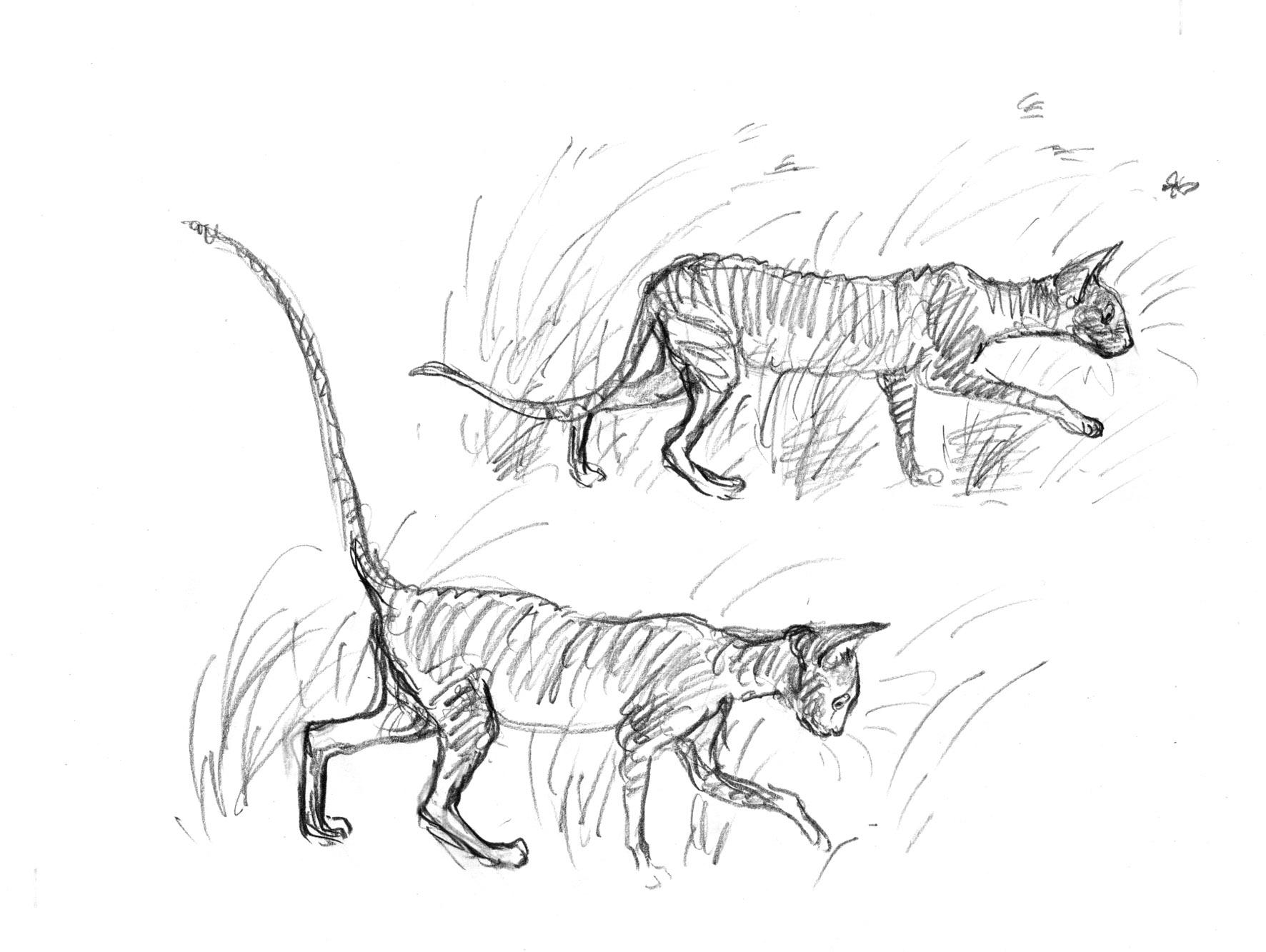 cornish cats in the grass judywatsonart lores