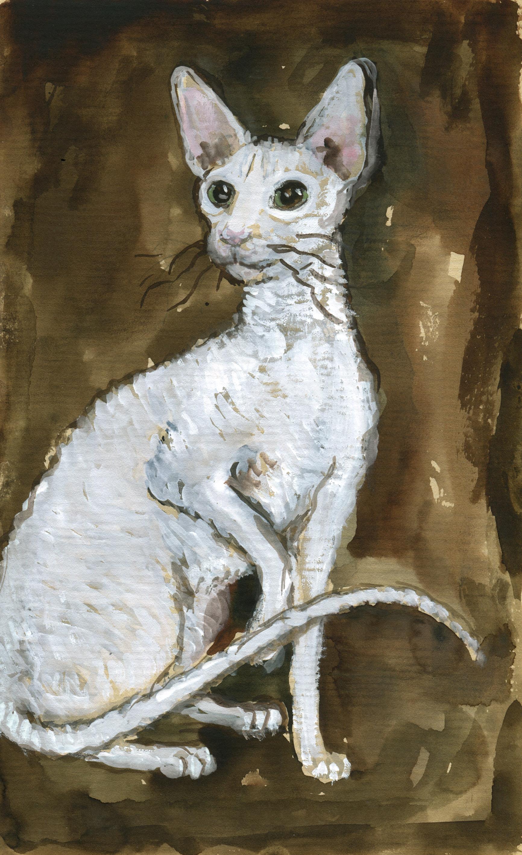 White Cornish Rex on Endpapers JudyWatsonArt lores