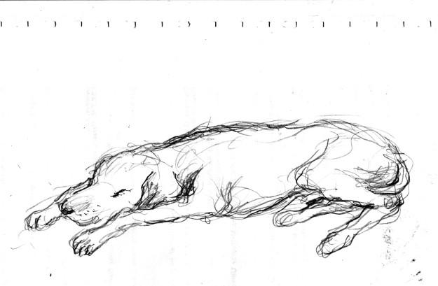 brain doodle dog sleeping