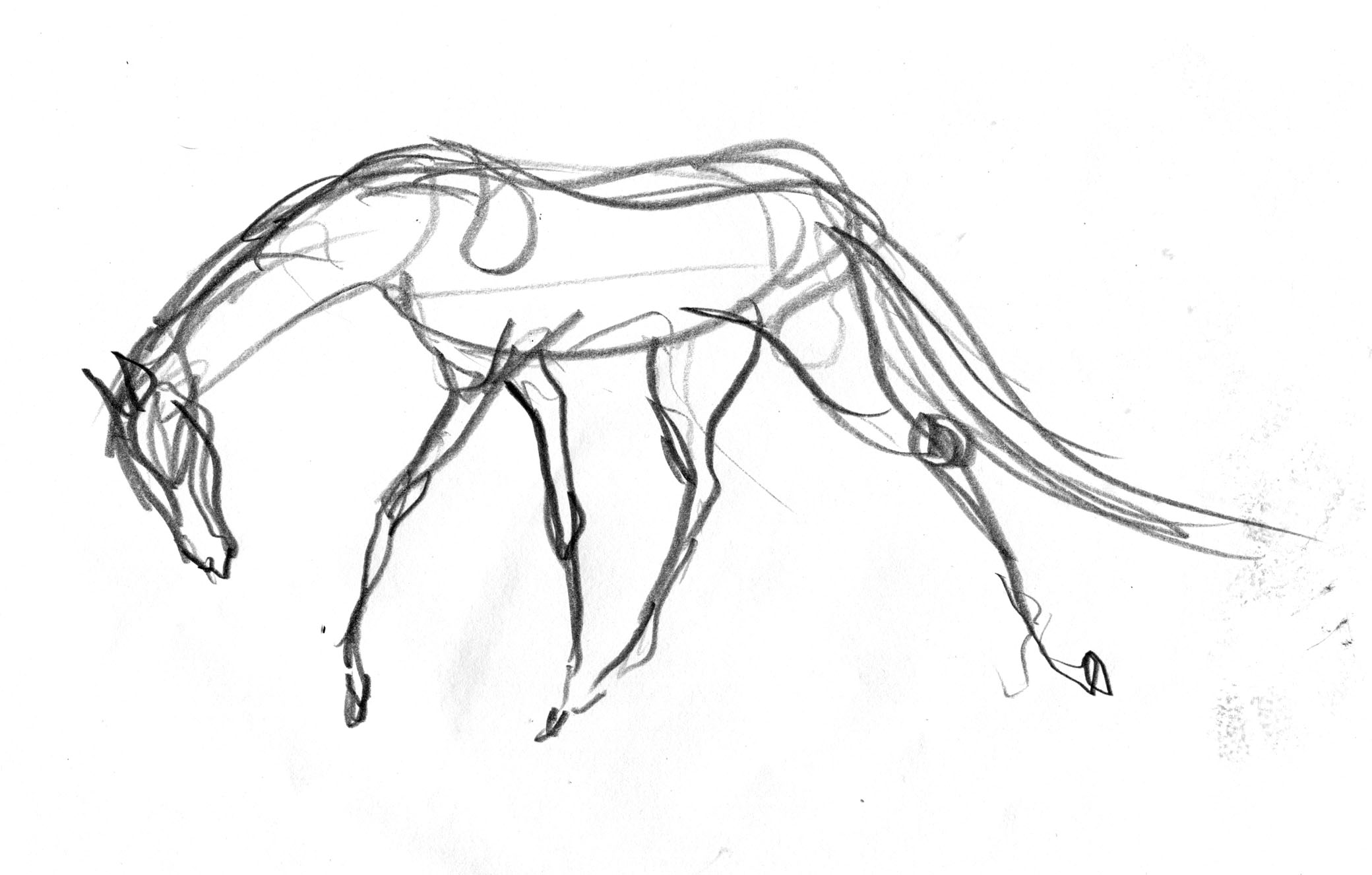 brain doodle horse single pale moving