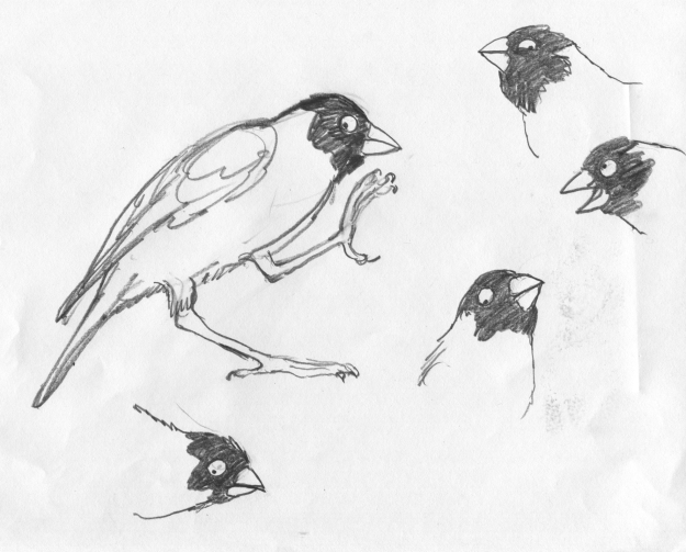 finch faces