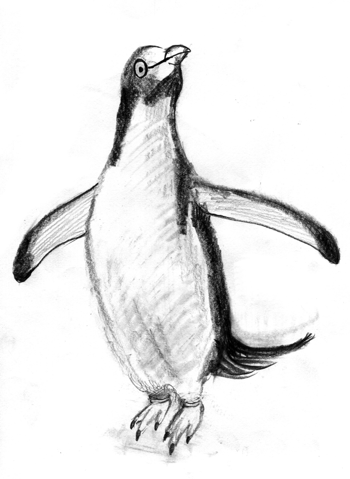 penguin very first pencil sketch