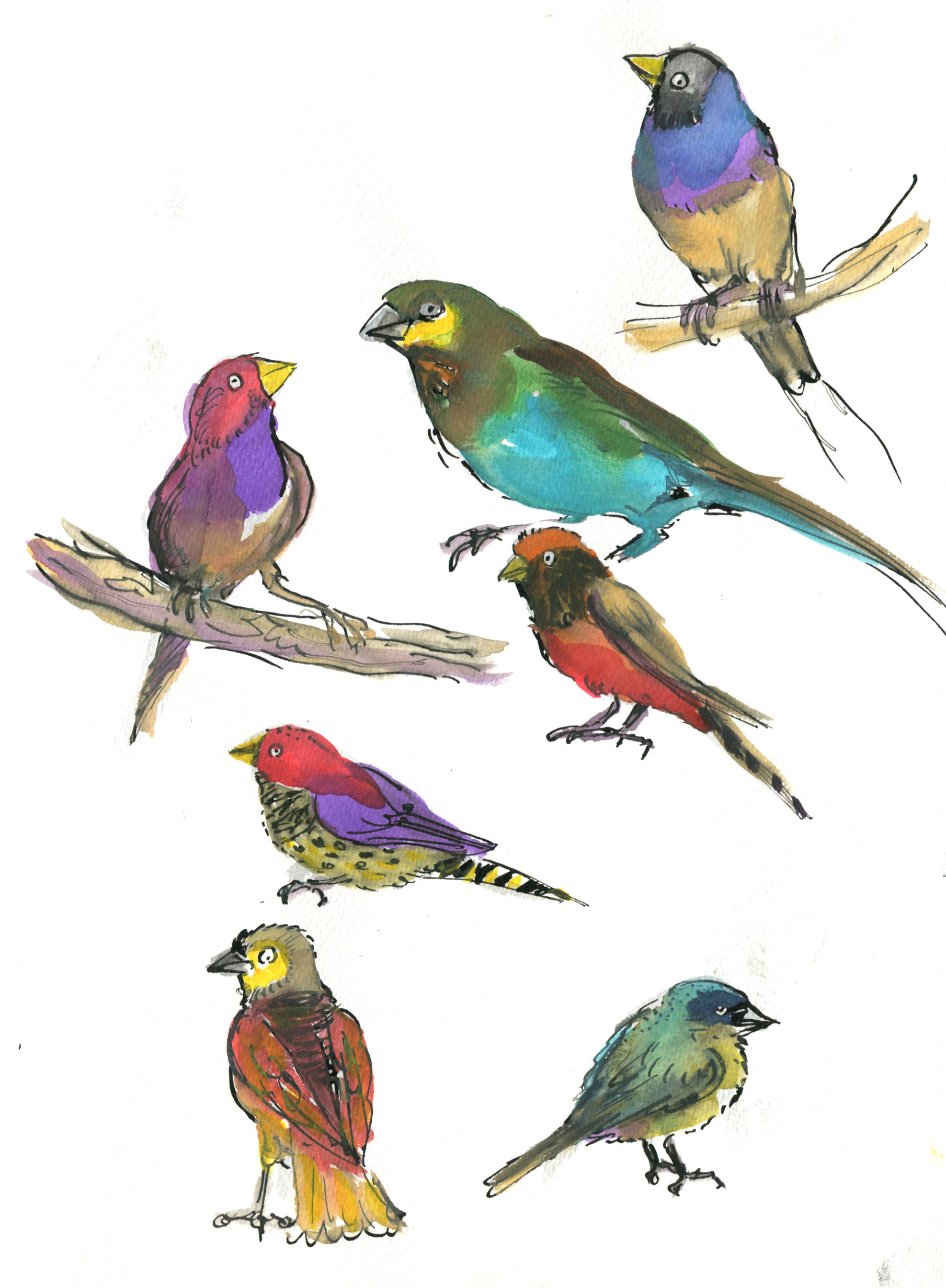 saturated finches