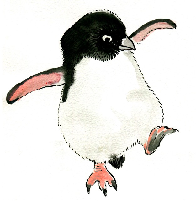 the rather dull small fluffy penguin