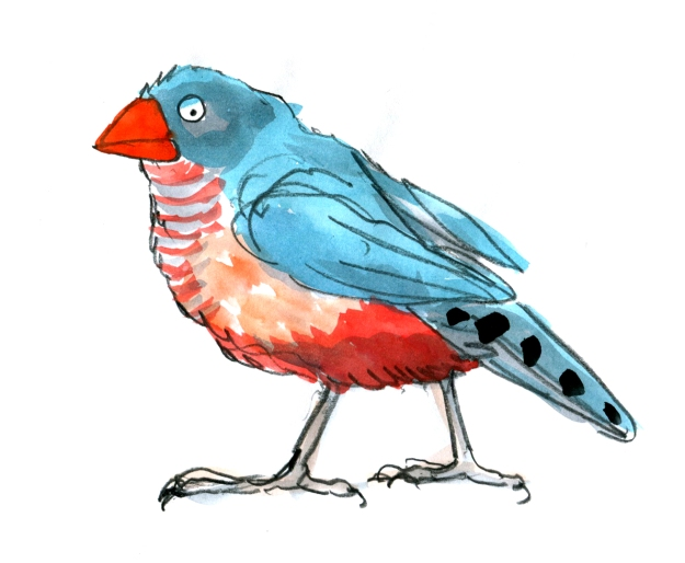 the stolid finch