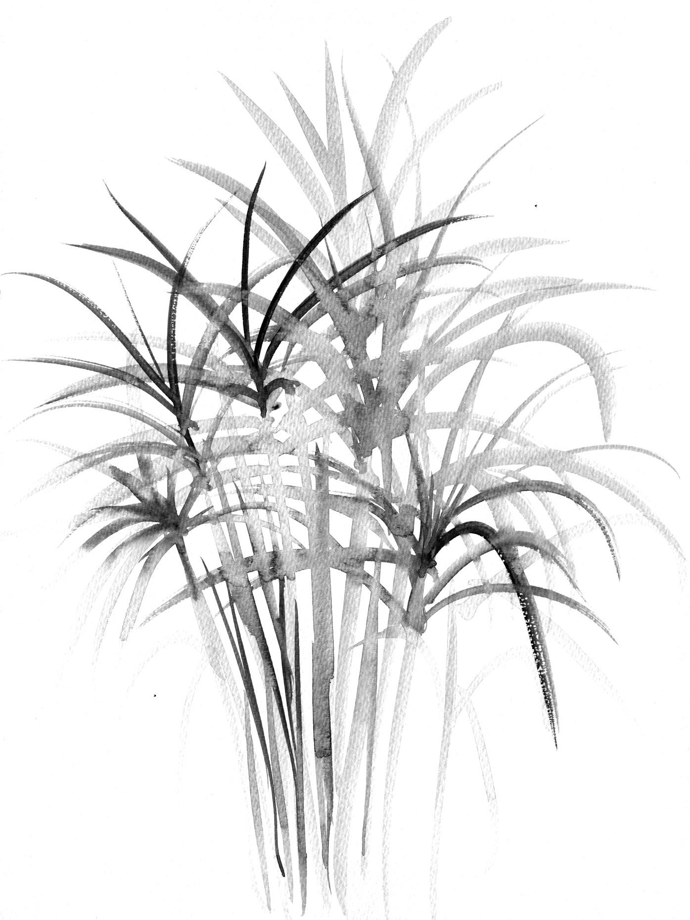 grassy tester lores