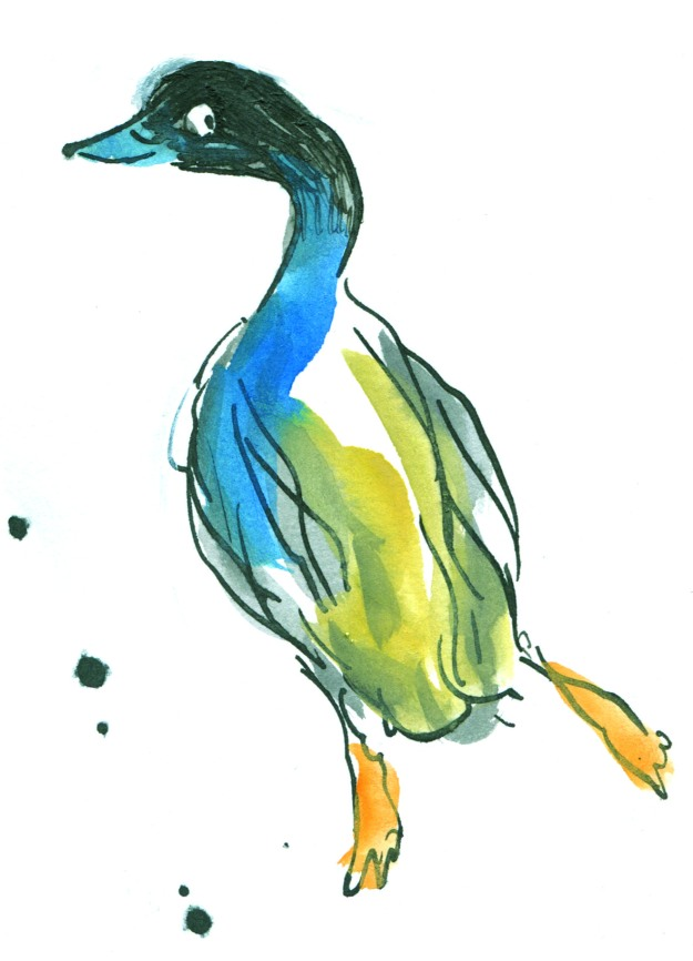 pen and ink cindermallard