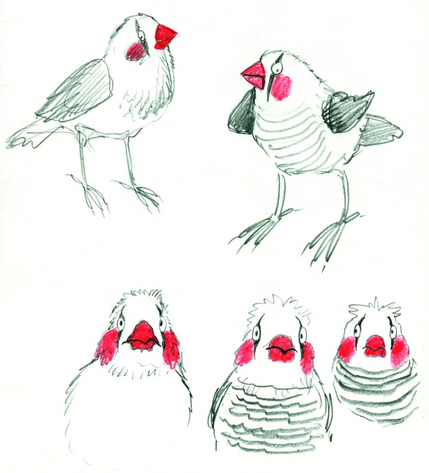 pencil finch clowns