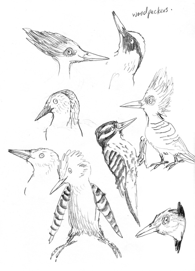 pencil woodpeckers