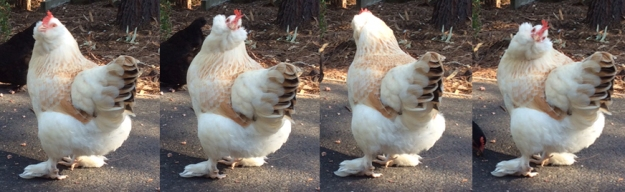 Takara spots a kookaburra.jpg