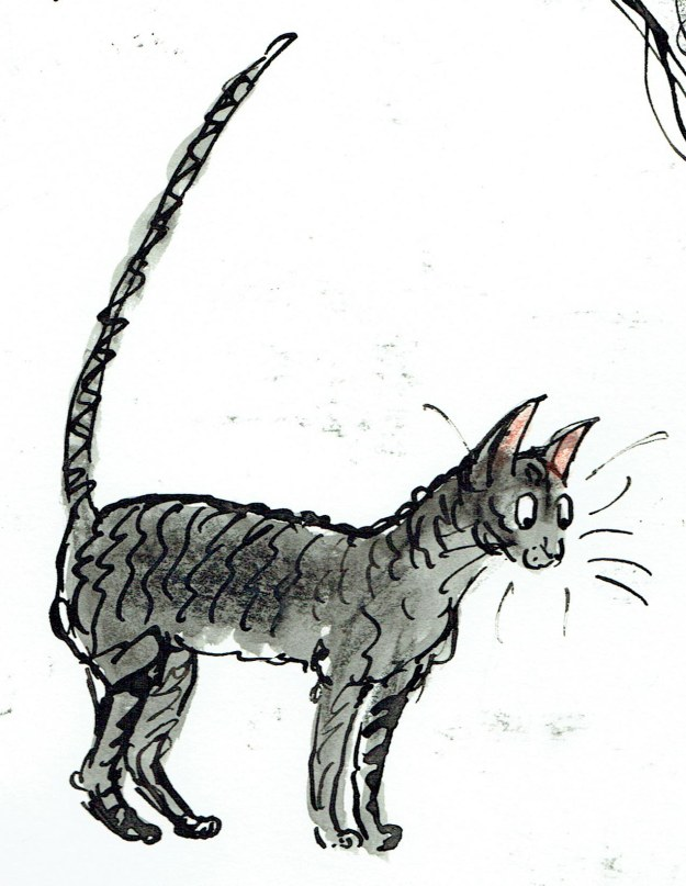 thunder cat with straight tail